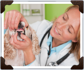 vet with small dog